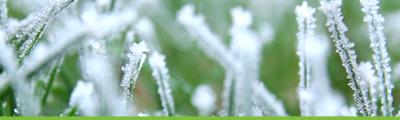 December: tuinonderhoud